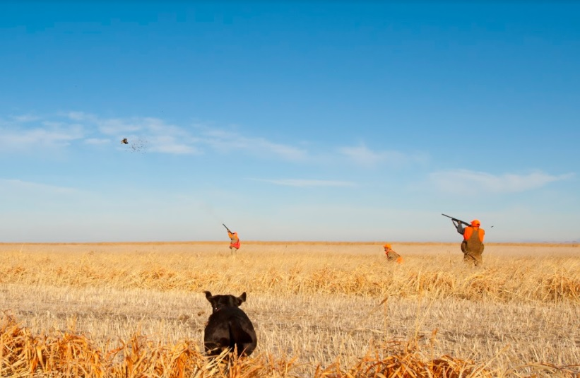 The Right Pheasant Hunting Guide for You